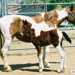An adoption surprise: half-day-old Kodak with his mother Daisy on 3-27-2004